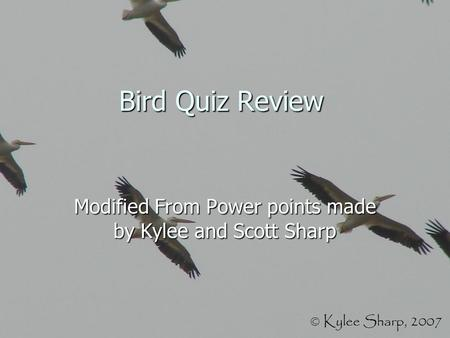 Bird Quiz Review Modified From Power points made by Kylee and Scott Sharp.
