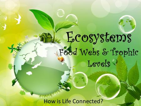 Ecosystems Food Webs & Trophic Levels How is Life Connected?