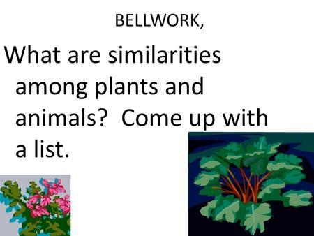 BELLWORK, What are similarities among plants and animals? Come up with a list.