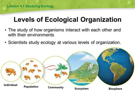 Levels of Ecological Organization The study of how organisms interact with each other and with their environments Scientists study ecology at various levels.