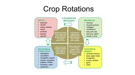 Crop Rotations. North Rotation: Winter Squash  Potatoes  Brassica  Roots  Greens  Winter Squash Mid Rotation: Tomatoes  Onions  Brassica  Greens.