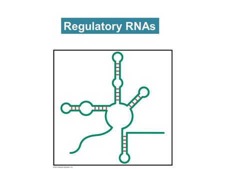 Regulatory RNAs. RNA DNA mRNA rRNA tRNA snRNA snoRNAmicroRNA siRNAribozymes Protein synthesis Splicing of mRNA Processing of rRNA Regulation of gene expression.