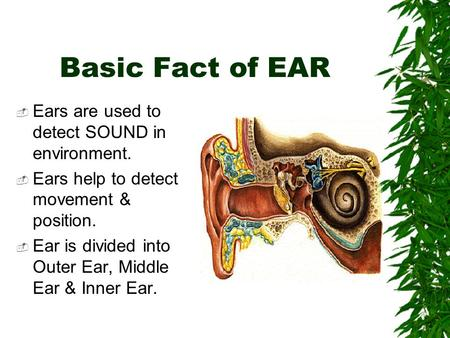 Basic Fact of EAR  Ears are used to detect SOUND in environment.  Ears help to detect movement & position.  Ear is divided into Outer Ear, Middle Ear.