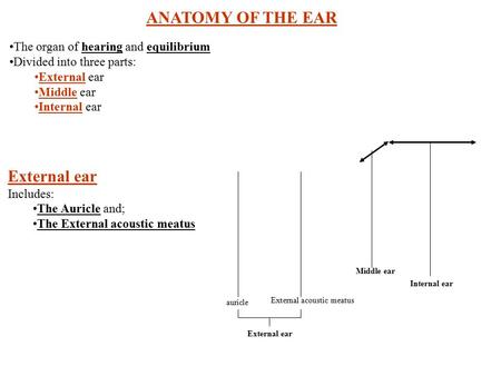 ANATOMY OF THE EAR The organ of hearing and equilibrium Divided into three parts: External ear Middle ear Internal ear External ear Includes: The Auricle.
