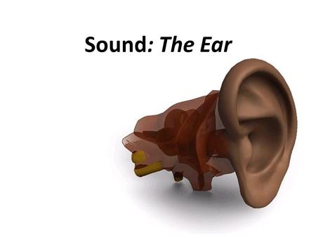 Sound: The Ear. Introduction Ears are sense organs that respond to sound. The ear's structure is designed to receive the sound waves… Your ear converts.