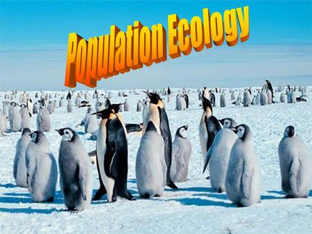 What is population? Group of individuals of the same species that live in the same area.