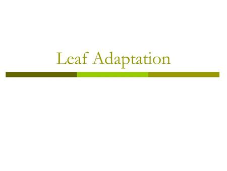 Leaf Adaptation. To know how leaves are adapted for photosynthesis.