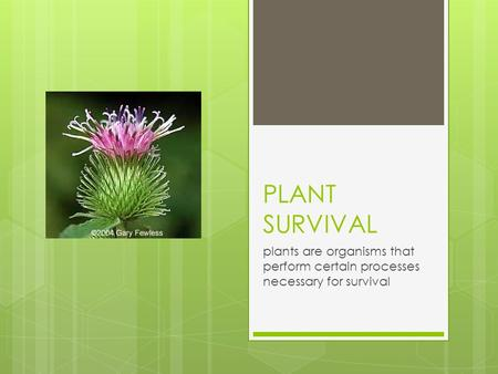PLANT SURVIVAL plants are organisms that perform certain processes necessary for survival.