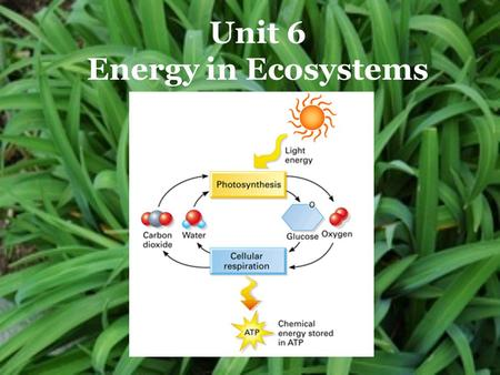 "Unit 6 Energy in Ecosystems. Photosynthesis ""making from light"" Photosynthesis Cellular Respiration."