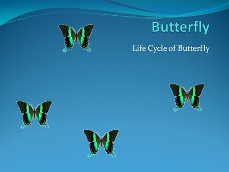 Life Cycle of Butterfly. Cycle does not have a start or ending. But let us start with the butterfly egg……