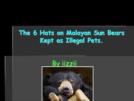 The 6 Hats on MalayanSun Bears Kept as Illegal Pets. The 6 Hats on Malayan Sun Bears Kept as Illegal Pets. By iizzii.