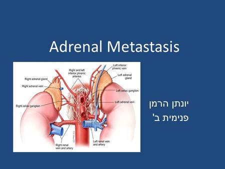 Adrenal Metastasis יונתן הרמן פנימית ב '. The adrenal gland is a common site of metastatic disease. fourth most common site of metastasis, after the lung,