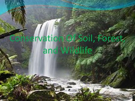 Conservation Of Soil, Forest, and Wildlife. I. Objectives At the end of the period, students are expected to: Discuss specific activities to conserve/protect.