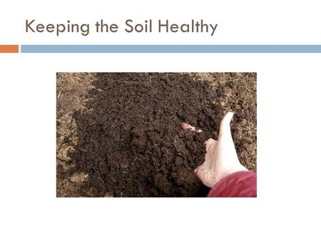 Keeping the Soil Healthy. What does a plant need to grow?  Sun  Water  Soil for food  Air  Just like you and me.