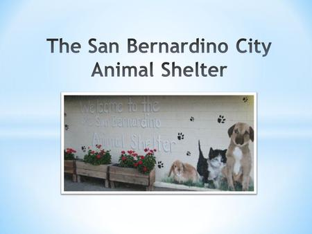 * The San Bernardino City Animal Shelter is currently staffed with 23 full-time positions, 2 part-time, and about 10 volunteers. The Shelter is open to.
