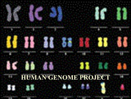Does the Human Genome Project affect the moral standards of society