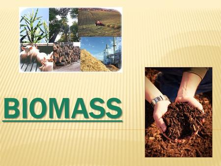 BIOMASS FORMATION The basic model of take up and accumulation of the solar power is the one that there carry out the plant green species the only energetic.
