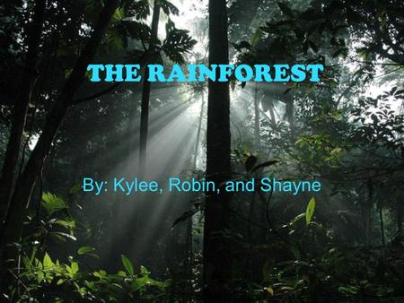 THE RAINFOREST By: Kylee, Robin, and Shayne. What is a rain forest? A rain forest is a hot, humid, rainy place where 50% of the animals live. 80 inches.
