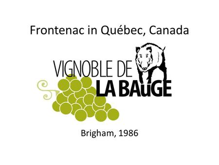 Frontenac in Québec, Canada Brigham, 1986. Simon Naud Started to work in a vineyard in 1986, Took charge of the buisness in 1996, (vines and wine) Started.