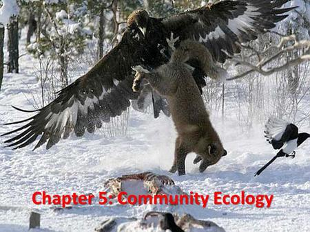 Chapter 5: Community Ecology. HOW DO SPECIES INTERACT?