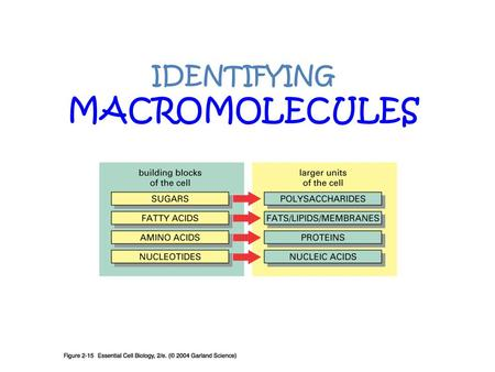 IDENTIFYING MACROMOLECULES. Indicators In this lab, you will use indicators as chemical detection tool. Indicator- something that can be used to show.