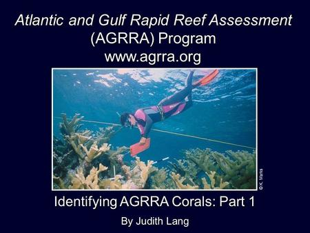 Identifying AGRRA Corals: Part 1 By Judith Lang Atlantic and Gulf Rapid Reef Assessment (AGRRA) Program  © K. Marks.