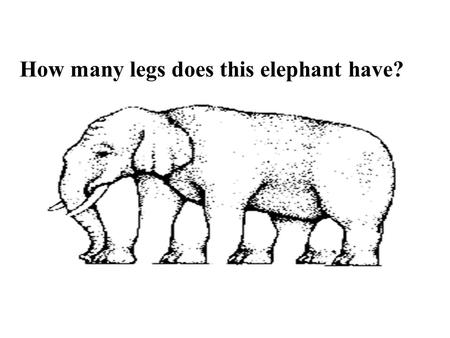 How many legs does this elephant have? Oceanography.