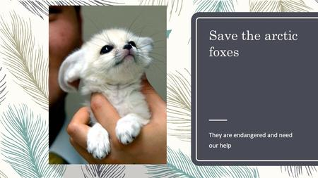 Save the arctic foxes They are endangered and need our help.