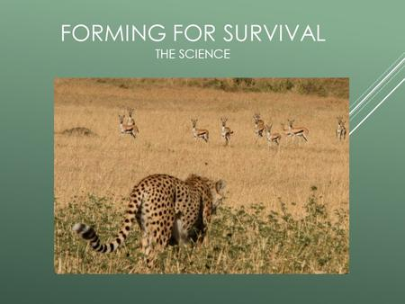 FORMING FOR SURVIVAL THE SCIENCE. FORMING FOR SURVIVAL Lets look at the science of this project…………….. How can you adapt to your environment? Environment-