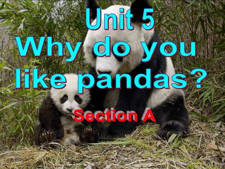 P-A-N-D-A panda G-I-R-A-F-F-E giraffe L-I-O-N lion Do you know these animals ?
