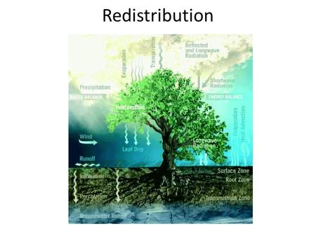 Redistribution. the continued movement of soil water after infiltration ends rate decreases over time influences plant available water influences solute.