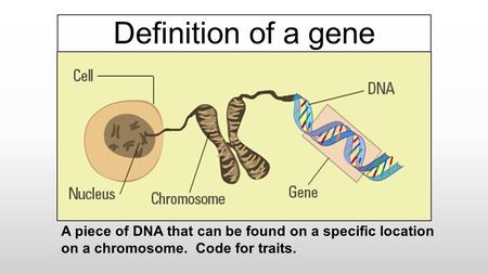 Definition of a gene A piece of DNA that can be found on a specific location on a chromosome. Code for traits.