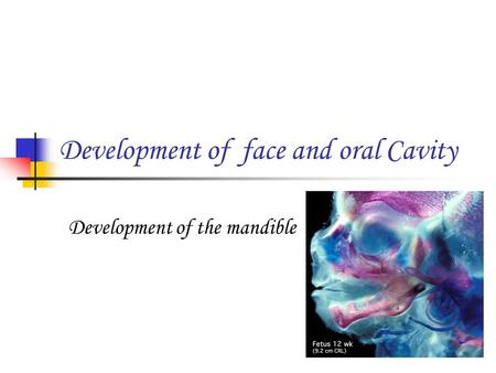 Development of face and oral Cavity Development of the mandible.