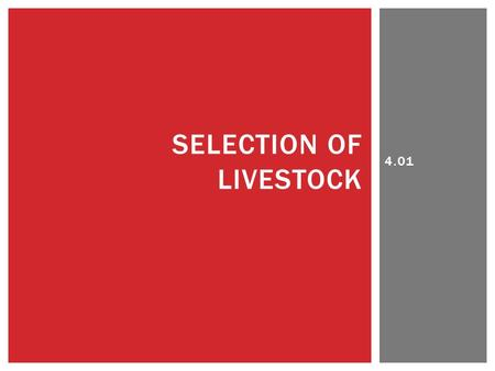 4.01 SELECTION OF LIVESTOCK.  Livestock producers use visual observations to:  Select breeding cattle or swine based on conformation, breed character,