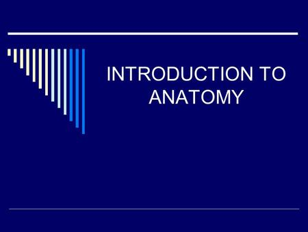INTRODUCTION TO ANATOMY The Basic Muscles FUNCTIONS OF A SKELETON: *Movement *Protection *Support *Supply.