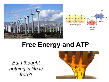 Free Energy and ATP But I thought nothing in life is free?!