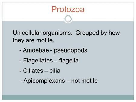 Protozoa Unicellular organisms. Grouped by how they are motile. - Amoebae - pseudopods - Flagellates – flagella - Ciliates – cilia - Apicomplexans – not.