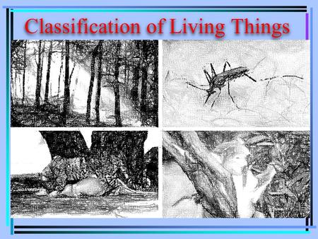 Classification of Living Things. Taxonomy is the science of grouping and naming organisms. Classification the grouping of information or objects based.