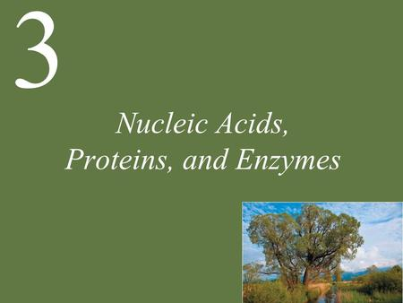 Nucleic Acids, Proteins, and Enzymes 3. Chapter 3 Nucleic Acids, Proteins, and Enzymes Key Concepts 3.1 Nucleic Acids Are Informational Macromolecules.