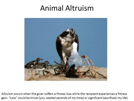 "Animal Altruism Altruism occurs when the giver suffers a fitness loss while the recipient experiences a fitness gain. ""Loss"" could be trivial (you wasted."