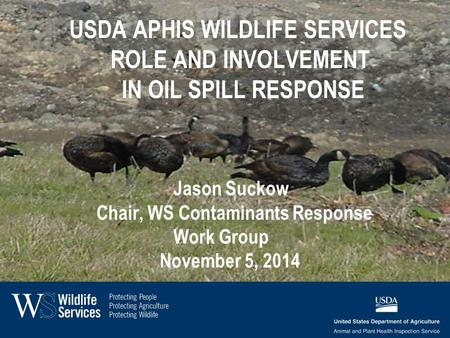 USDA APHIS WILDLIFE SERVICES ROLE AND INVOLVEMENT IN OIL SPILL RESPONSE Jason Suckow Chair, WS Contaminants Response Work Group November 5, 2014.