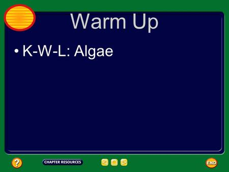 Warm Up K-W-L: Algae. Warm Up Write the question and the answer: What are the three groups we divide Protists into?