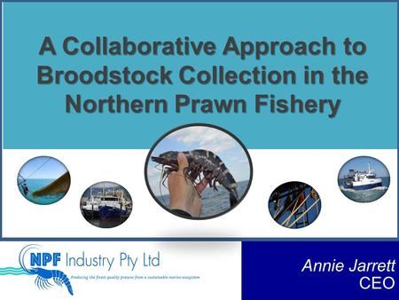 A Collaborative Approach to Broodstock Collection in the Northern Prawn Fishery Annie Jarrett CEO.