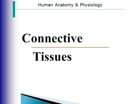 Human Anatomy & Physiology Connective Tissues.  All connective tissues consist of living cells surrounded by a matrix.  The difference in the type of.