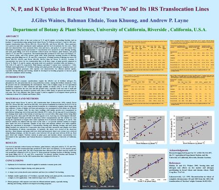 N, P, and K Uptake in Bread Wheat 'Pavon 76' and Its 1RS Translocation Lines J.Giles Waines, Bahman Ehdaie, Toan Khuong, and Andrew P. Layne Department.