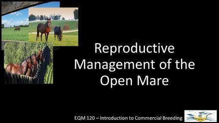 Reproductive Management of the Open Mare EQM 120 – Introduction to Commercial Breeding.