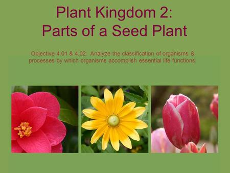 Plant Kingdom 2: Parts of a Seed Plant Objective 4.01 & 4.02: Analyze the classification of organisms & processes by which organisms accomplish essential.