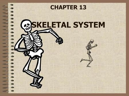 CHAPTER 13 SKELETAL SYSTEM. Structure and Function Functions of the skeletal system –Provides shape and support –Protects internal organs –Stores minerals.
