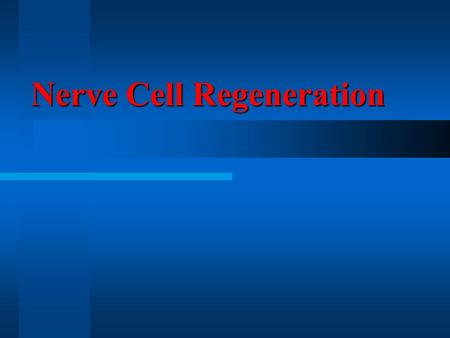 Nerve Cell Regeneration. NERVE CELL: The function of a neuron is to communicate information. Nerve cells control sensations in the body and other functions.