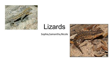 Lizards Sophia,Samantha,Nicole. Animal Description Brown and spikey and orange. Green,blue,with long claws. Black orange long and skinny. Brown orange.